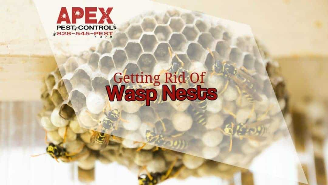 Wasp Nest Removal Should Be Left To Pest Professionals