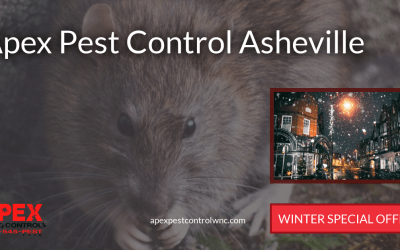 Overwintering Pests To Become Aware Of