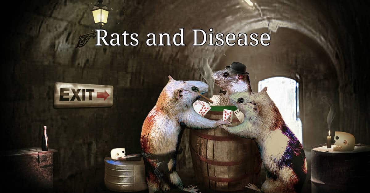 Diseases Spread by Rats and Mice