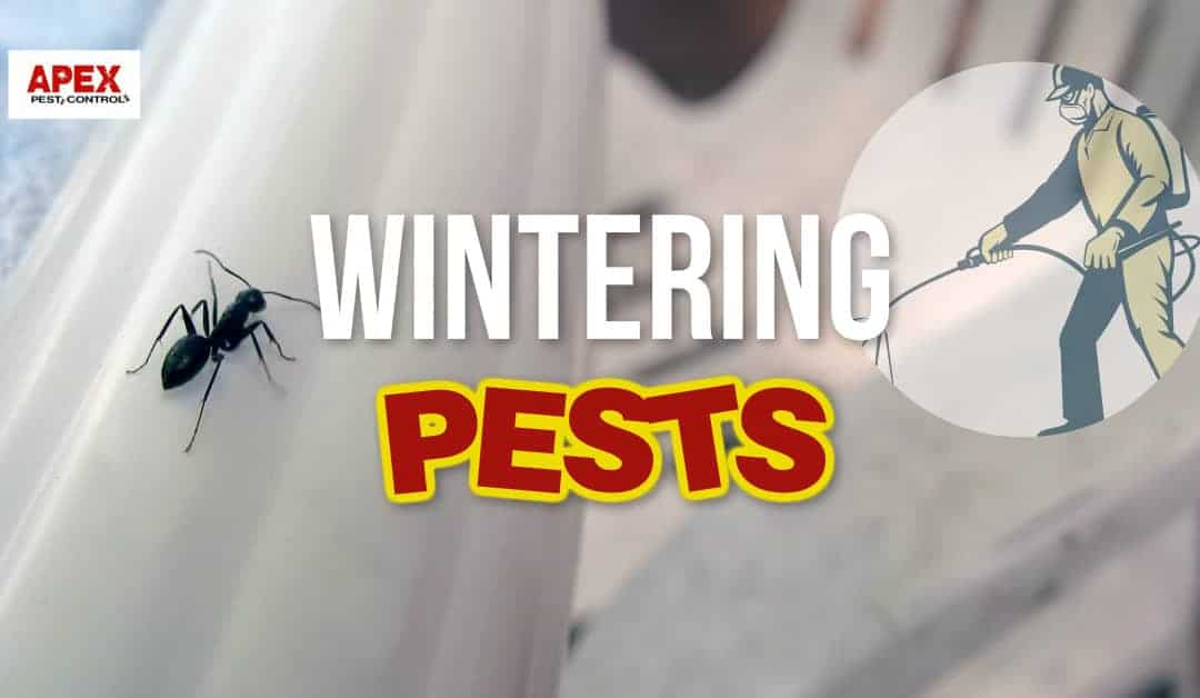 Wintering Pests To Become Aware Of