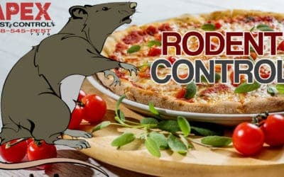 The Importance Of A Rodent Control Program