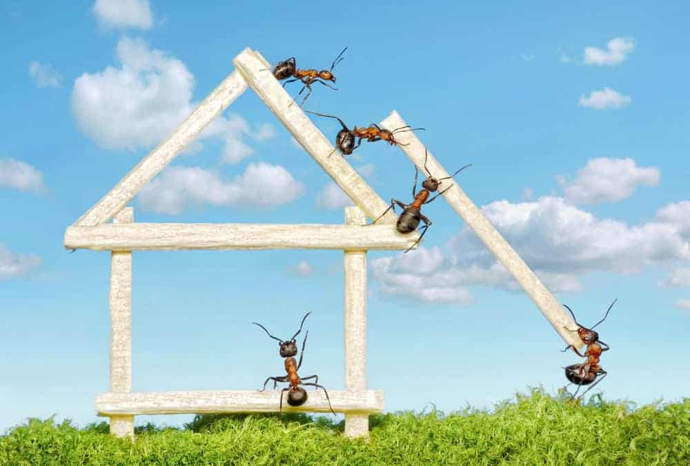 Prevent Carpenter Ants With Our Top Tips