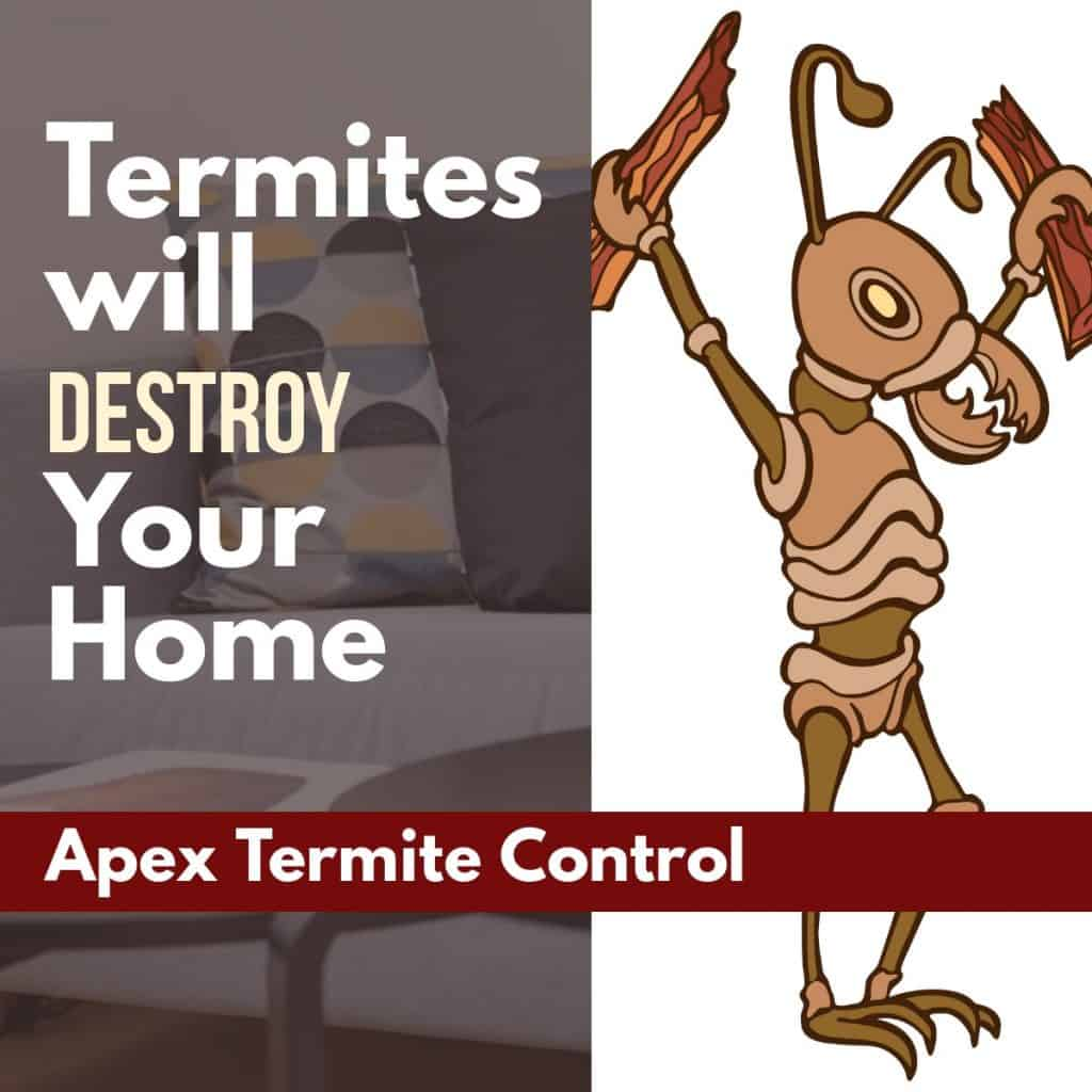 Signs of Termites in Your Homes
