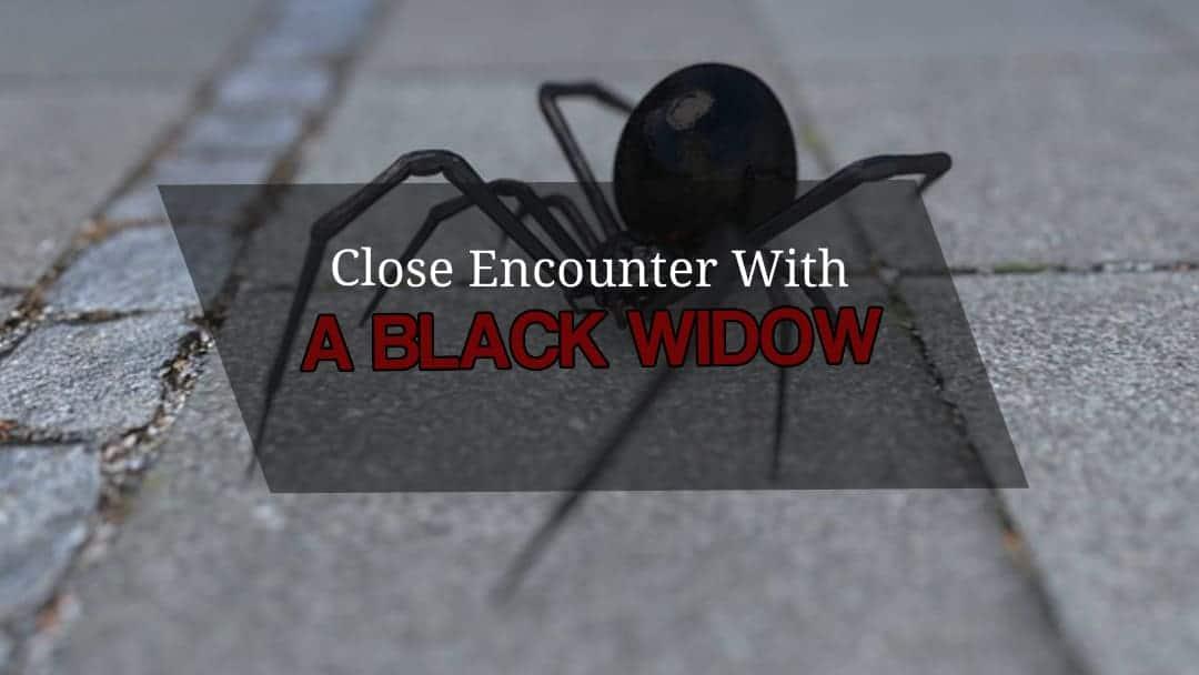 black widow encounter