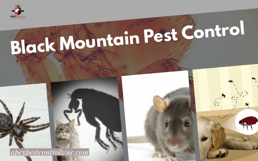 Learn Everything You Need to Know About Black Mountain Pest Control