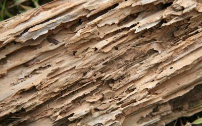 Why You Need Termite Control