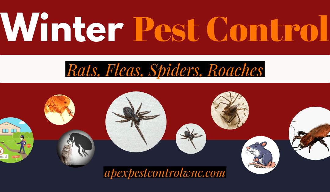 Winter Pest Control: How to Keep Pests Away in Winter
