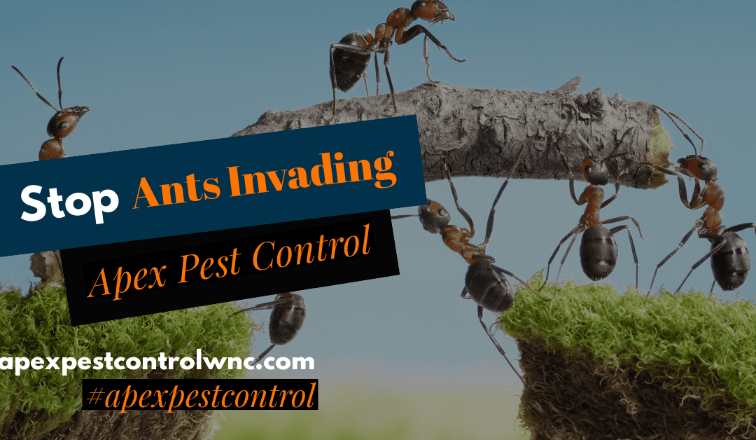 Ants That Invade in Spring