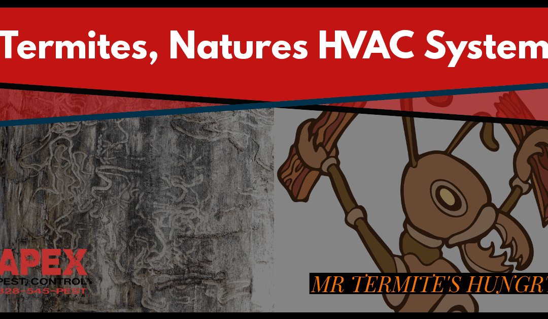 Air Conditioning and Termites