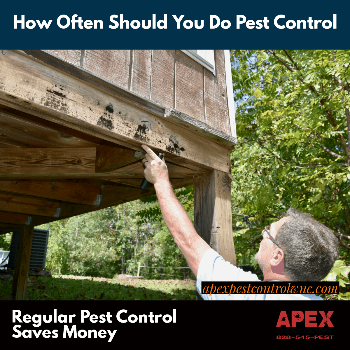 How Often Should You Treat For Pests?