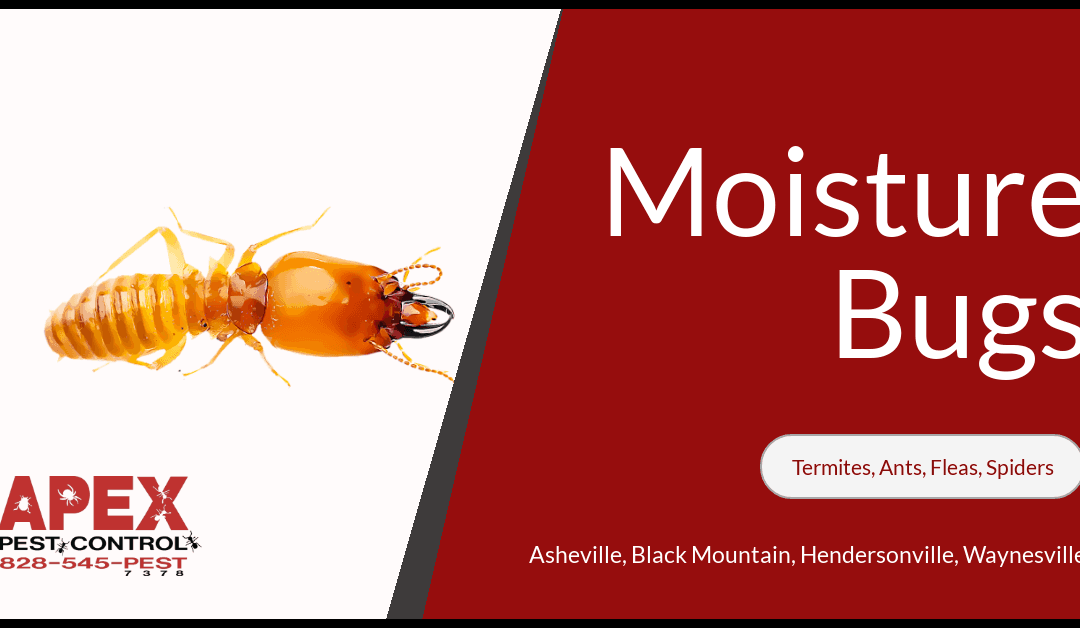 Bugs Attracted to Moisture