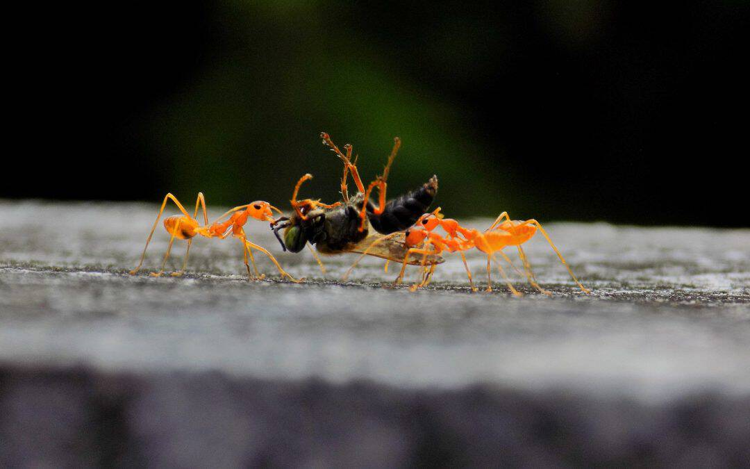 What Attracts Ants?