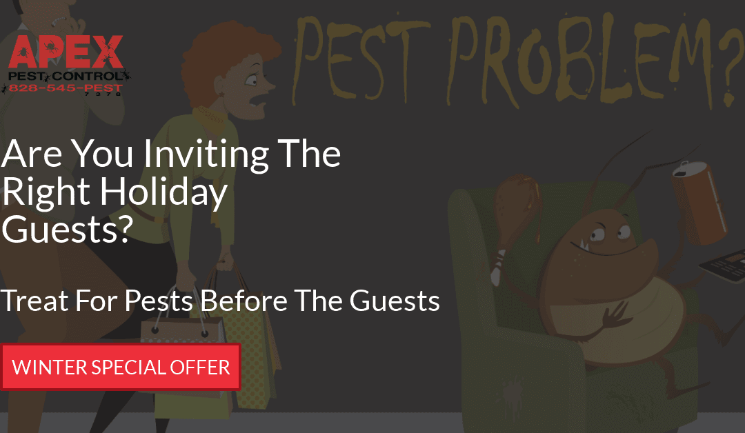 Christmas Guests and Christmas Pests