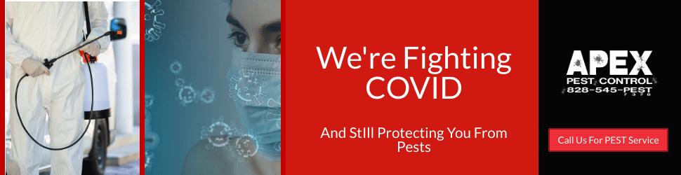 Pest Control Asheville 5