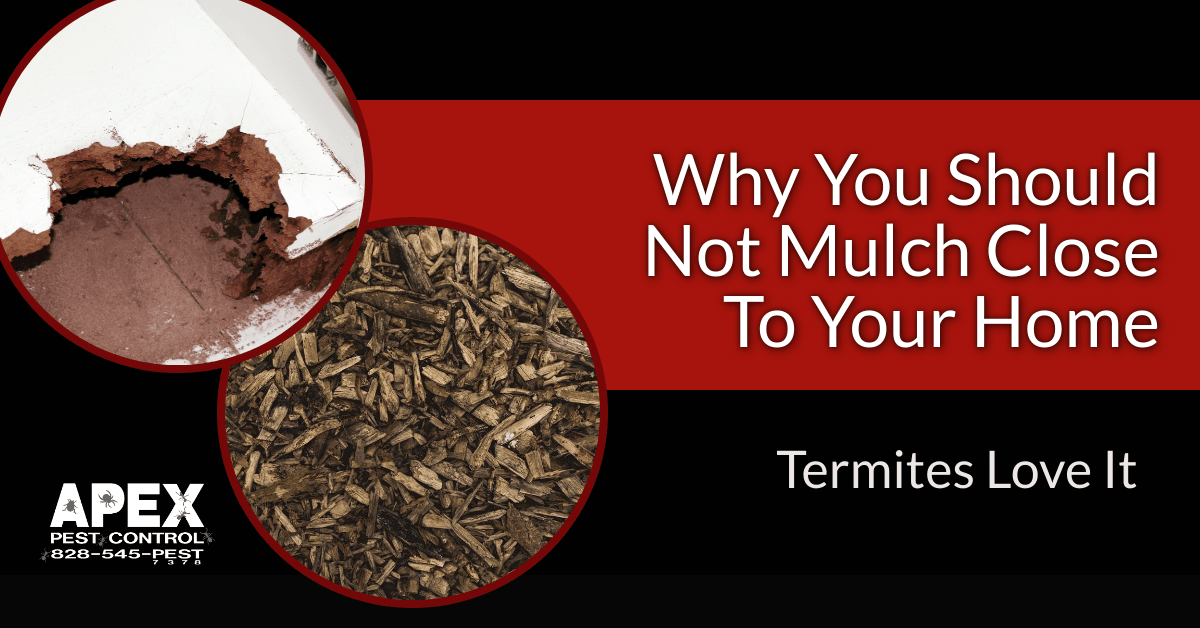 Why Mulch Attracts Termites?