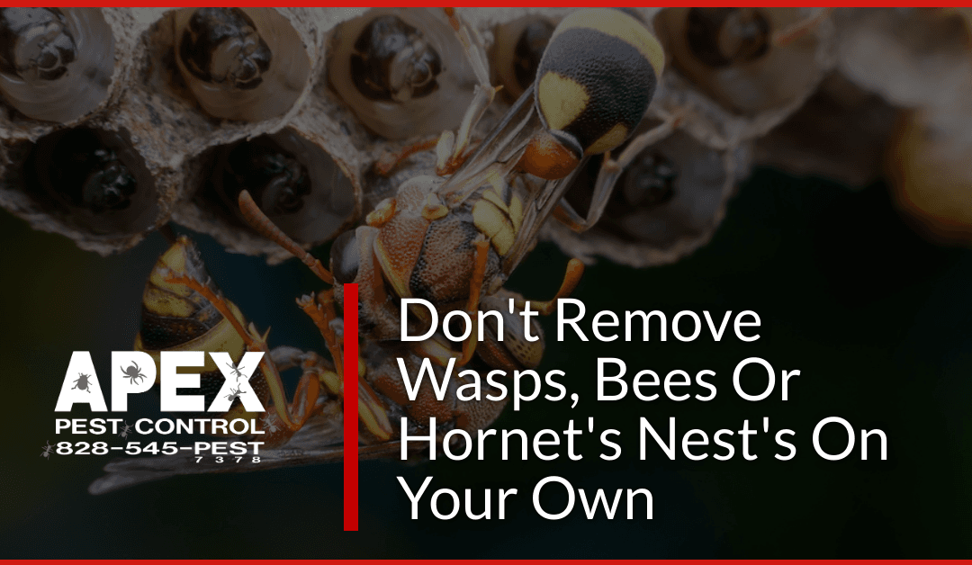 Wasp Nest Removal – Don't DIY It