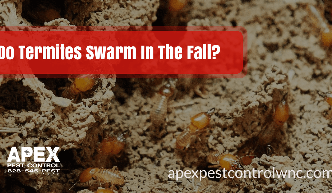 Do Termites Swarm In The Fall