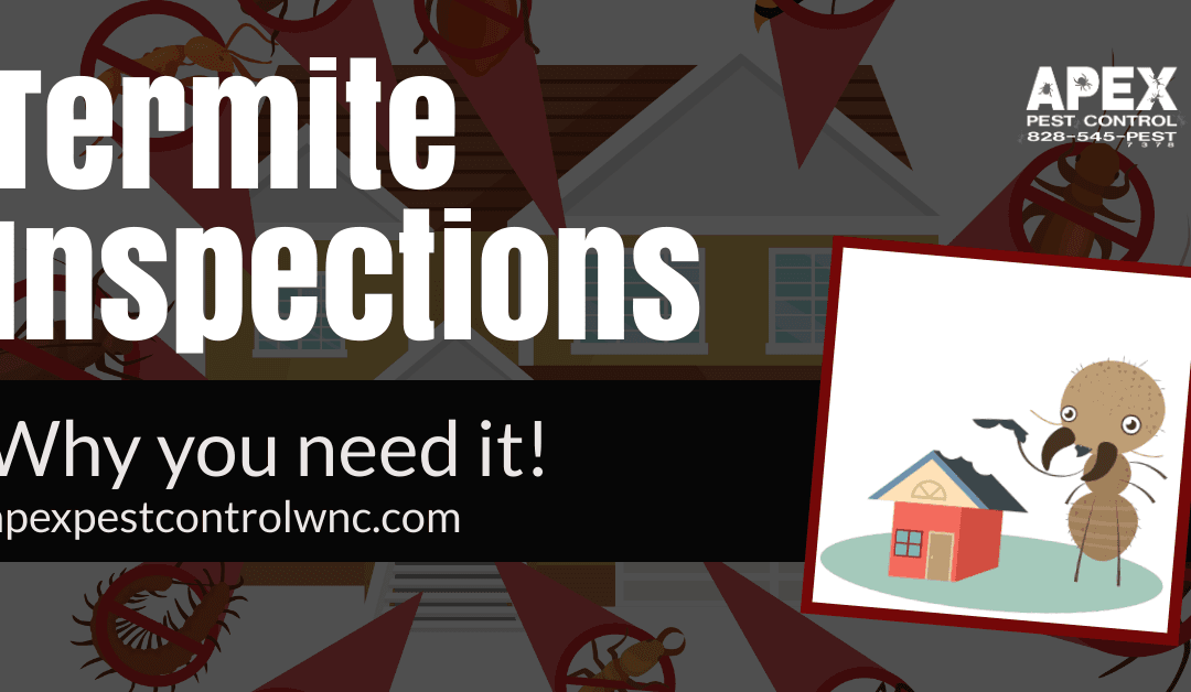 Why You Need A Termite Inspection and Renewal