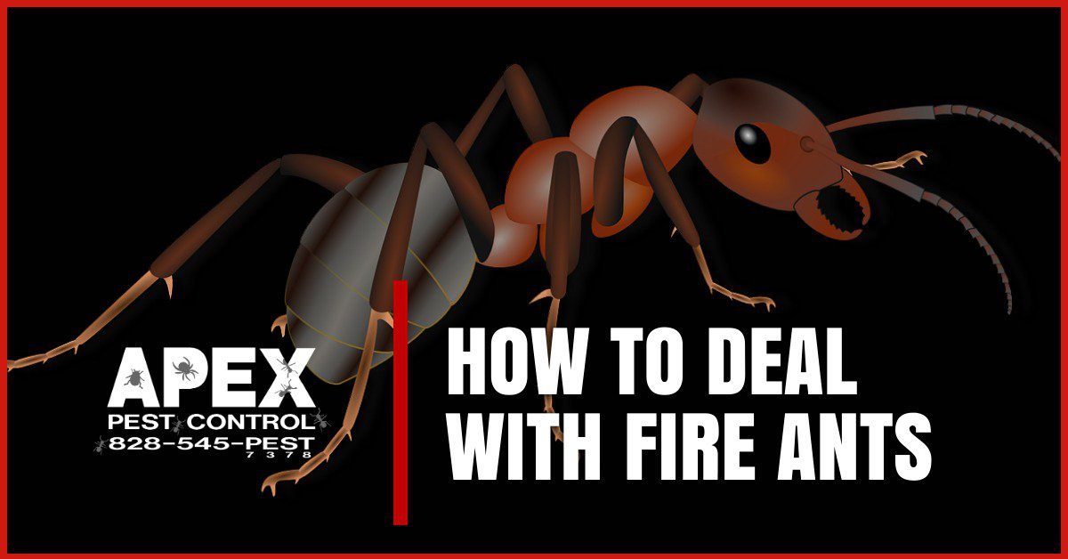 How To Avoid Fire Ants In Your Home And Garden