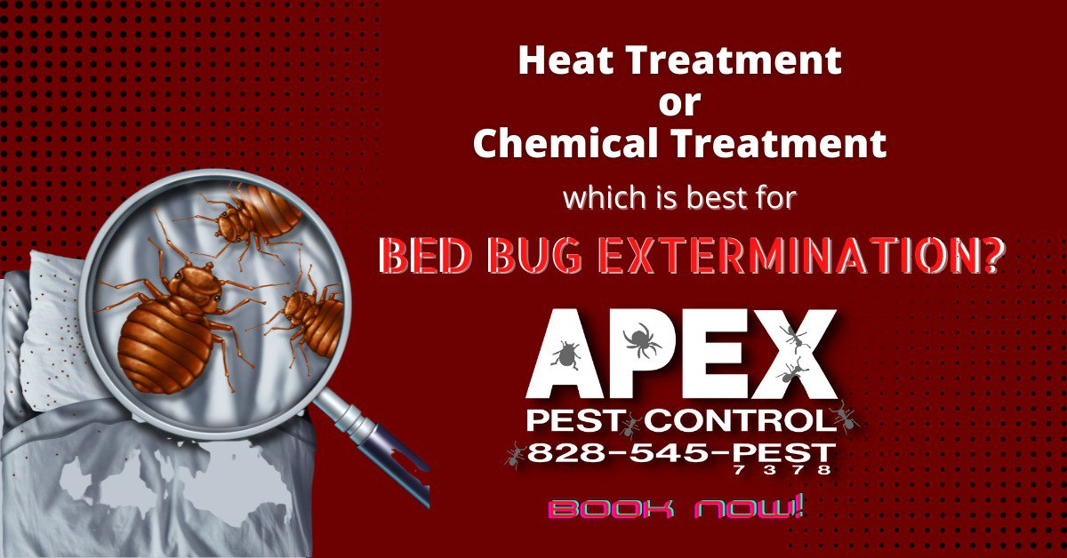 Bothered by Bed Bugs? Know the Best Treatment that Really Works